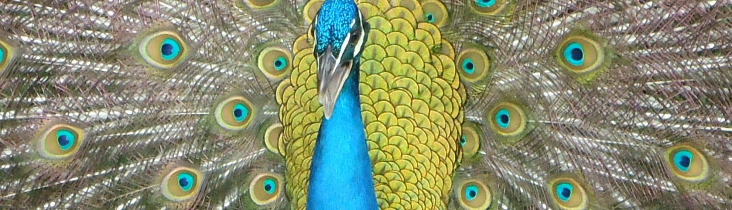 Acoustic Communication in Birds